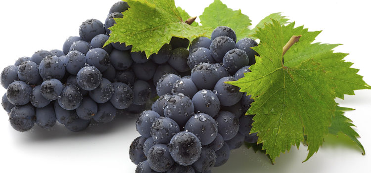 GRAPE JUICE… a miracle for health