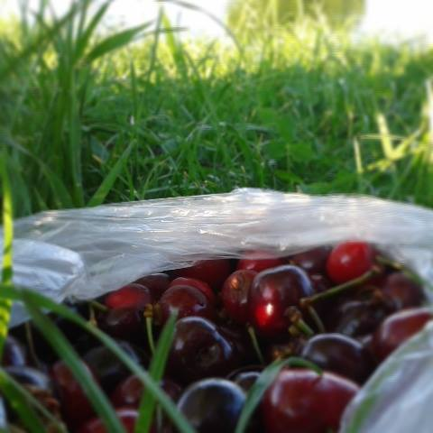 cherries-in-the-grass